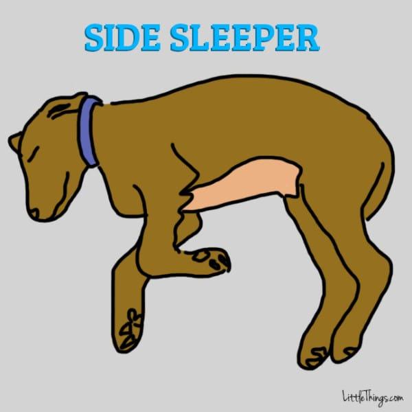 http://www.littlethings.com/different-dog-sleeping-positions-v1/?utm_source=ism&utm_medium=social&utm_campaign=animals