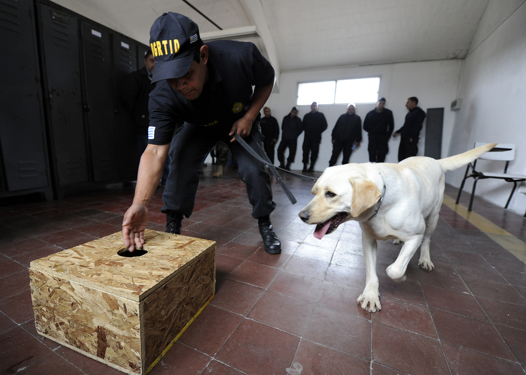 101108-N-8546L-063 MONTEVIDEO, Uruguay (Nov. 9, 2010)--A Uruguayan police officer directs his drug sniffing dog to a training box as part of a scent imprint exercise conducted by U.S. Navy military working dog handlers to teach Uruguayan forces dog handlers basic obedience, drug searching and patrol techniques during a three-week training mission coordinated by the Maritime Civil Affairs and Security Training Command (MCAST). MCAST delivers teams of highly skilled Sailors with diverse backgrounds to partner nations to share their experience and strengthen international relationships as an integral part of the Navy's maritime strategy. (U.S. Navy photo by Mass Communication Specialist 1st Class (SW) Peter D. Lawlor)