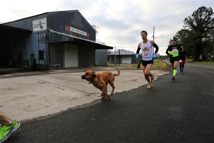http://www.today.com/pets/adorable-dog-wandered-alabama-half-marathon-finished-7th-t68986