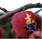 e7f80911b3077 食べるのがもったいない 世界の高価なフルーツ トップ10! – Trendy ...