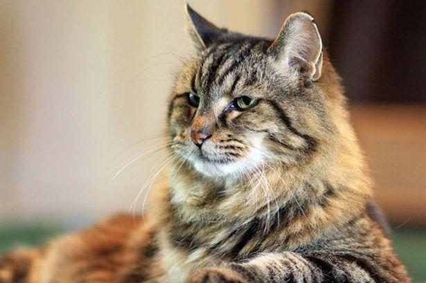 big sale d0f5d 96fd2  インスタで話題 世界最高齢の121歳の猫がニャンともかわいい!